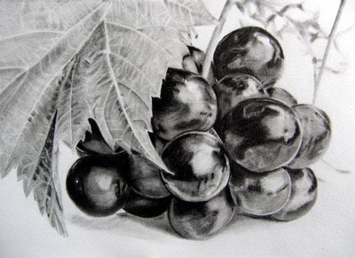 枝川いくみ鉛筆画練習作葡萄