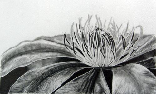 枝川いくみ鉛筆画練習作