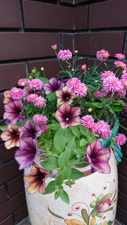 我家の花壇1