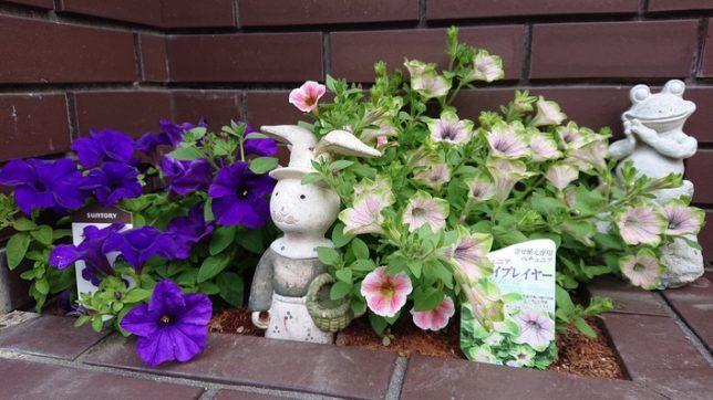 我家の花壇2