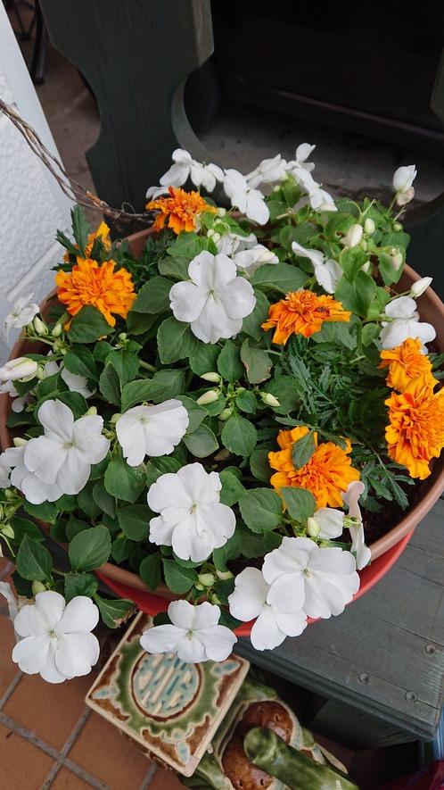 我家の花壇3