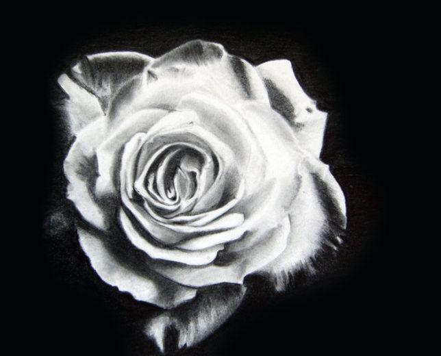 妻の鉛筆画練習 バラの花