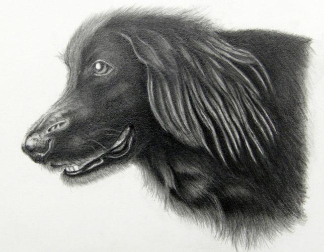 枝川真理の鉛筆画教室生徒作犬