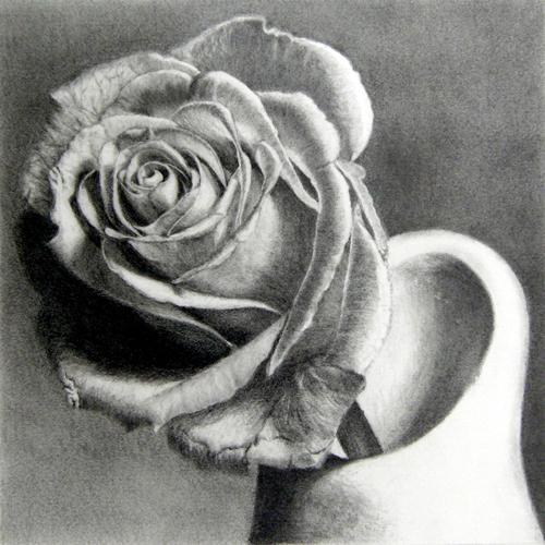 枝川真理の鉛筆画教室、今田さん 薔薇の鉛筆画
