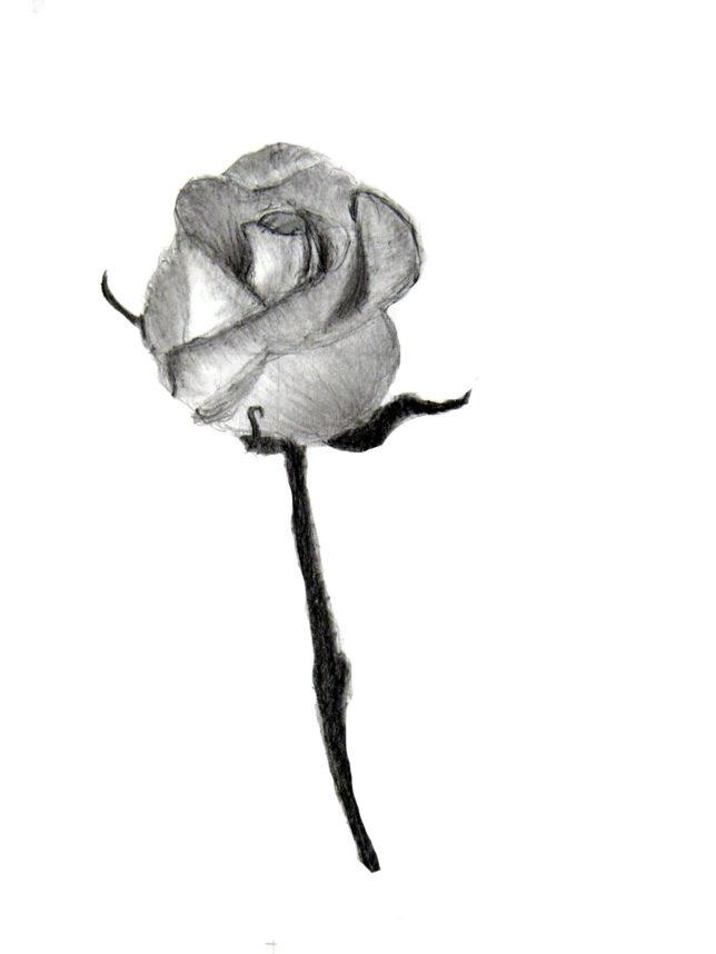 薔薇の鉛筆画