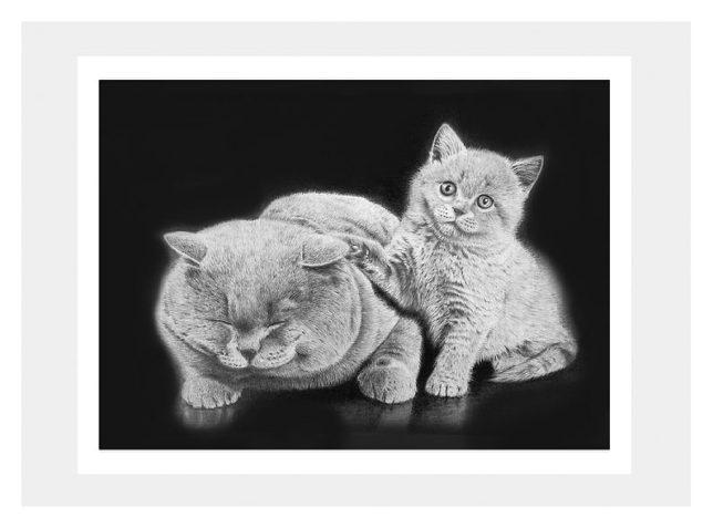 枝川真理の鉛筆画教室、 生徒作 谷村さん 猫