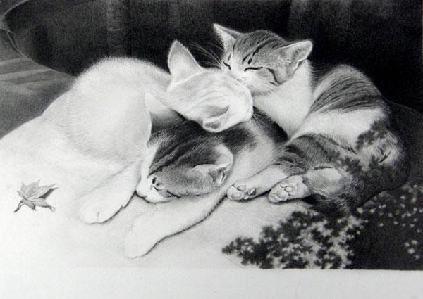鉛筆画 猫 坂本さんの索引