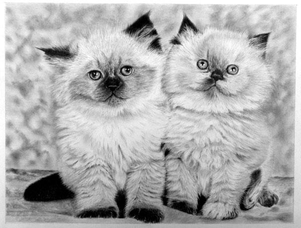 鉛筆画、猫 谷村さん