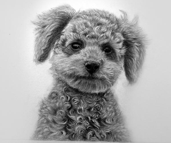 枝川真理の鉛筆画教室 生徒作 子犬
