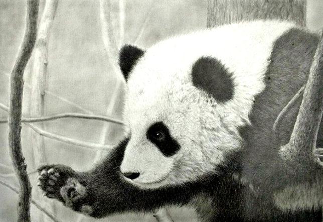 枝川真理の鉛筆画教室 生徒作 パンダ