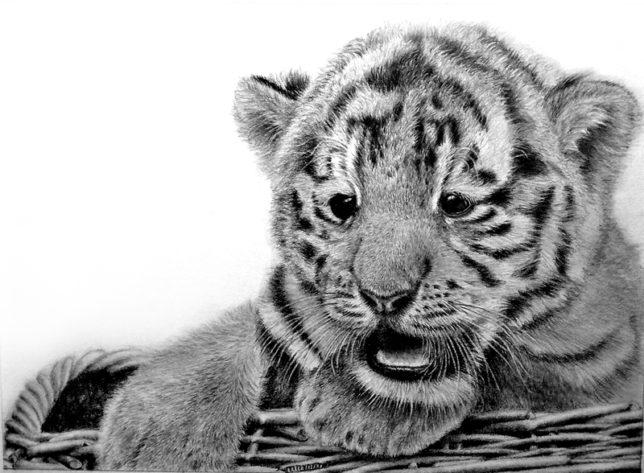 枝川真理の鉛筆画教室 生徒作 虎の赤ちゃん