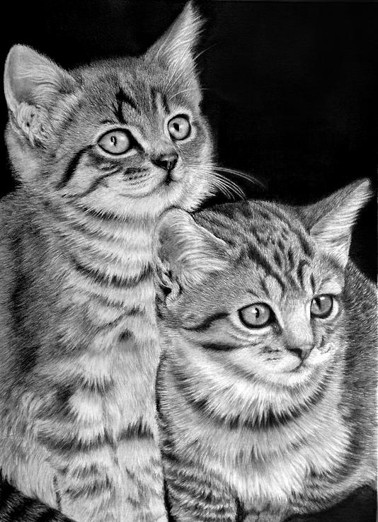枝川真理の鉛筆画教室 生徒作 猫2匹