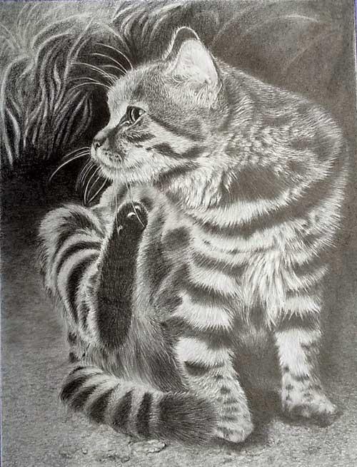 枝川真理の鉛筆画教室 生徒作品谷村さん 猫